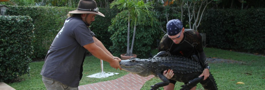 Jimmy Riffle and Paul Bedard on Animal Planet's hit show, 'Gator Boys' —Photo courtesy of Animal Planet