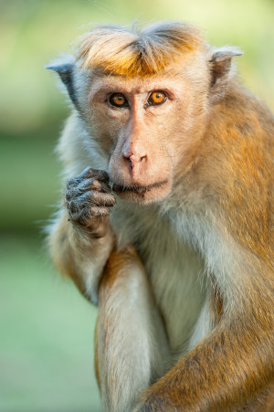 """monkey kingdom kumar flirting A populist take on simian society and alpha leadership leads to an entertaining look at caste systems in the animal kingdom monkey kingdom """" is kumar peels."""