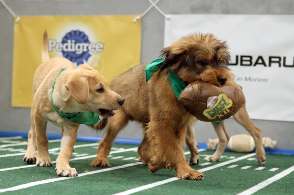 Puppy Bowl XII airs Sunday, Feb. 7. Photo courtesy of Animal Planet.