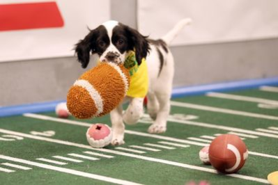 Is that a fumble at Puppy Bowl? Photo courtesy of Animal Planet.