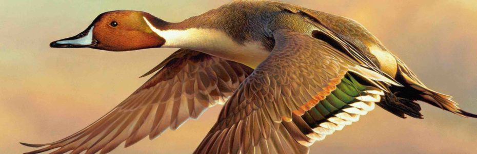INTERVIEW: Wildlife artists compete for top prize in 'Million Dollar Duck'