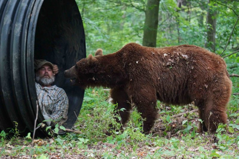 Jeff Watson teaches the bears about denning up. Photo courtesy of Animal Planet.
