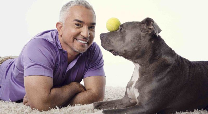 INTERVIEW: Cesar Millan spotlights new canine project for veterans on 'Dog Nation'
