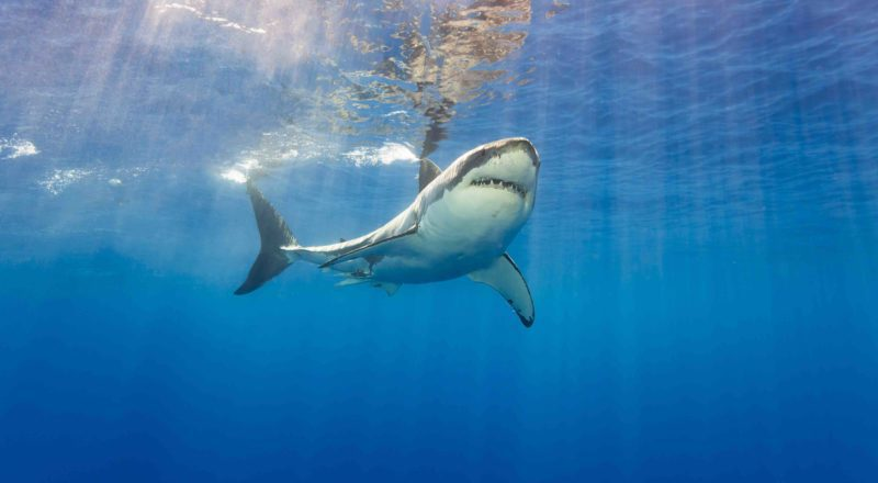 INTERVIEW: Turning fear into fascination on Nat Geo's SharkFest