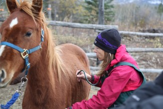 Dr. Michelle Oakley checks out a pair of horses outside of Destruction Bay, YT. Photo courtesy of © National Geographic Channels / Eric Stalzer.