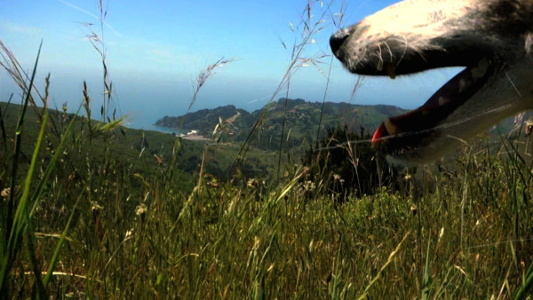 Lolabelle, a rat terrier, is featured in Heart of a Dog. Photo courtesy of Abramorama/HBO Documentary Films.