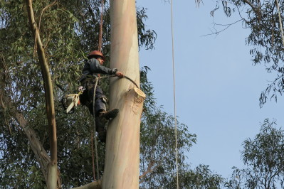 Rookie arborist Nate Esposito works in a tree on Deadliest Job Interview. Photo courtesy of Discovery Channel.