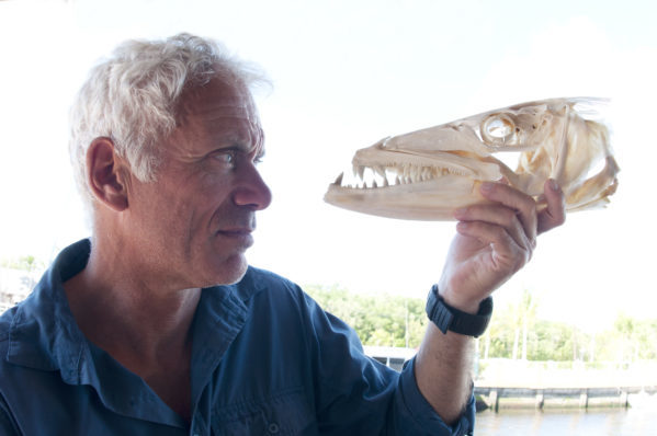 Animal Planet Animal Planet NIKON D90 Jeremy Wade looking at a barracuda skull in Key West, Florida Keys, Miami. 2015-03-20 19:51:43 Discovery Communications f/6.3 1/100sec ISO-200 16mm