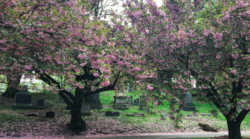 INTERVIEW: NY cemetery stories come alive in Jessica Ferri's new book of 'hidden histories'