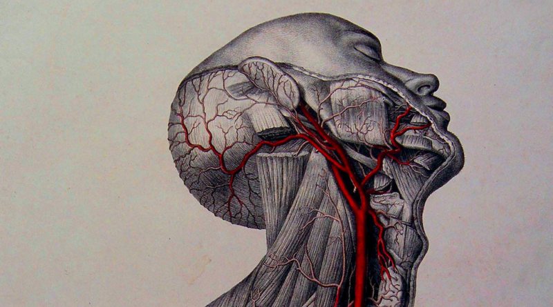 REVIEW: 'Anatomica: The Exquisite and Unsettling Art of Human Anatomy' by Joanna Ebenstein
